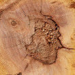 Wood texture of cut tree trunk, close-up — Stock Photo