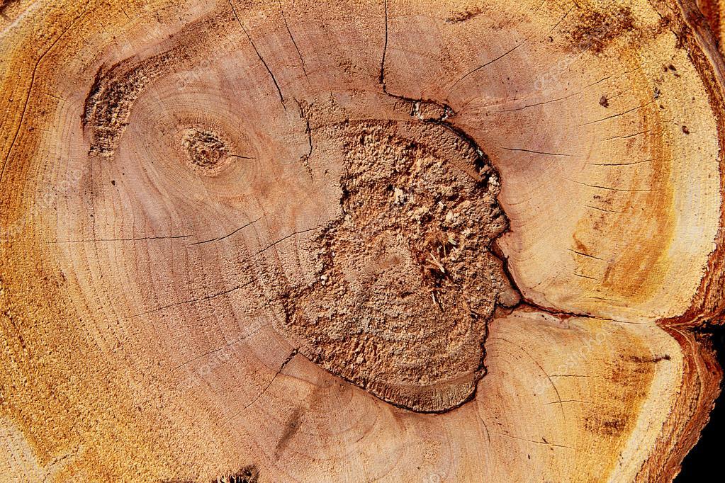 Texture de coupe bois tronc darbre gros plan photographie tkemot 40852473 - Tronc d arbre coupe ...