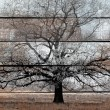 Old wood background with white painting and black tree — 图库照片