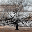 Photo: Old wood background with white painting and black tree