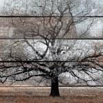 antigo fundo de madeira com pintura branca e preta árvore — Foto Stock
