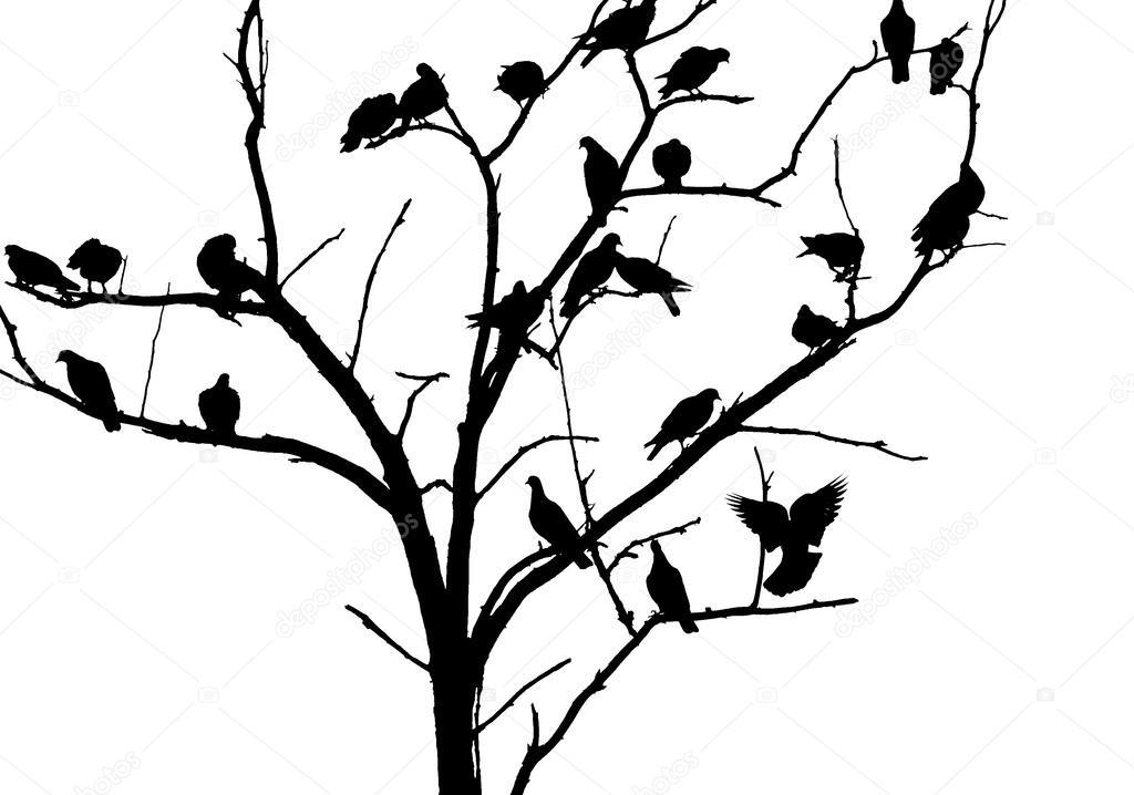 tauben auf dem baum schwarz wei foto vogel silhouette. Black Bedroom Furniture Sets. Home Design Ideas