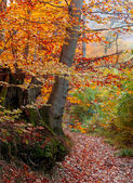 Colorful autumn forest with path — Stock Photo