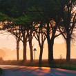 Avenue in dawn fog — Stock Photo
