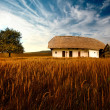 Farmhouse on the field — Stok fotoğraf