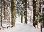Winter forest — Stockfoto