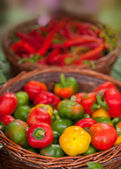 Green,yellow and red cherry paprika — Photo