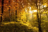 Autumn leaves in the forest — Stock Photo