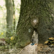 Stock Photo: Fairy house in the tree