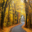 Road through the autumn forest — Stock Photo