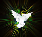 Dove in the light — Stock Photo