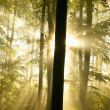 Autumn forest with fog and lights — Stockfoto