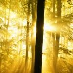 floresta de Outono com nevoeiro e luzes — Foto Stock