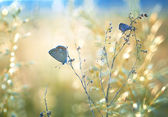 Field with butterfly and bokeh — Stok fotoğraf