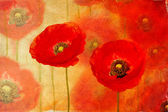 Painting red poppies — Stock Photo