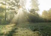 Glade in the forest with fog and sunlight — Foto Stock