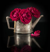 Red roses in old silver jug — Stock Photo