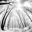Branches in winter — Stock Photo