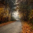 Autumn forest in the foggy — Stock Photo