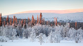 Beautiful winter landscape in Lapland — Stock Photo