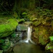 Waterfall in forest — Stock Photo #40354707