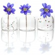 Hepatica in glass bottles — Stock Photo #44963423