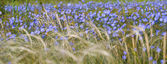 Feathergrass and flax flowers — Stok fotoğraf