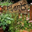 Wooden plant sign in flower garden — Stock Photo
