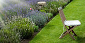 Lavender garden in the morning — Stock Photo