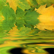 Leaves background with rippling water — Stock Photo