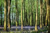 Estanque secreto en bosque bluebell — Foto de Stock