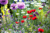 Wild flower garden with poppies — Stock Photo