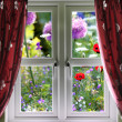 Window view onto wild summer garden — Stock Photo
