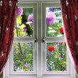 Window view onto wild summer garden — Stock Photo #17213681