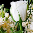 White roses close up — Stock Photo