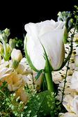 White roses close up — Stock Photo