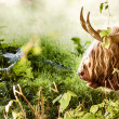 Highland cow laying down — Stock Photo