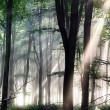 Deep forest morning light — Lizenzfreies Foto