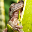 Small frog on a plant — Stock Photo