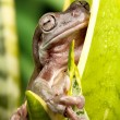 Small frog on a plant — Stock Photo #36062265