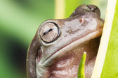 Small frog close up — Stock Photo