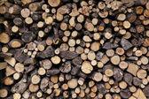 Big pile of sawn logs — Stock Photo