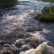 Stock Video: Rough river flows through forest. Scandinavia, loop