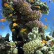 Colorful Fish on Vibrant Coral Reef, static scene, Red sea — Stock Video #18697033