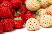 Ripe White and Red Strawberries — Stock Photo