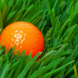 Orange golf ball in the long grass — Stock Photo