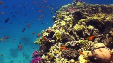 Colorful Fish on Vibrant Coral Reef, Red sea — Stockvideo