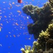 Colorful Fish on Vibrant Coral Reef, Red sea — Stock Video #25860171