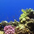 Colorful Fish on Vibrant Coral Reef, Red sea — Stock Video #25865735