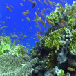 Colorful Fish on Vibrant Coral Reef, Red sea — Stockvideo #25868389